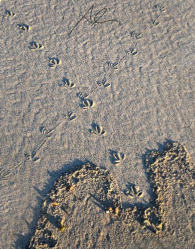 Merry Beach Tracks