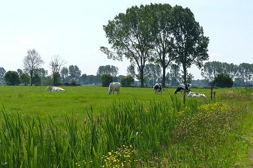 Rural landscape near Dalfsen - Overijssel