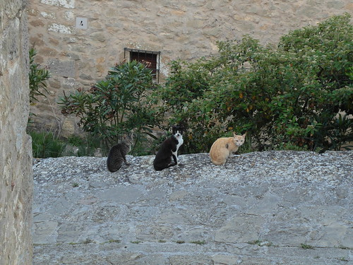 Three cats from Sos del Rey