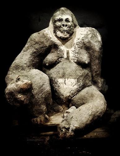 Gorila (sin niebla)