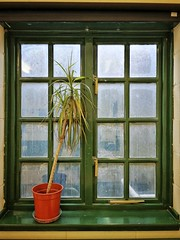 Plant Window