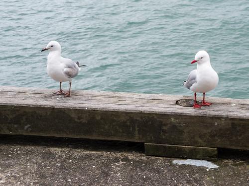 160803 Auckland-02.jpg