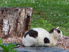 Cat Beside A Tree Stump.