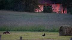 2019.06.20_0031_Le corbeau et le renard