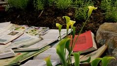 des fleurs et des livres - Photo of Nantes