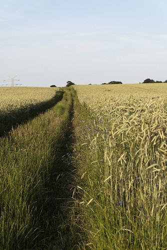 Spaziergang durch die Felder