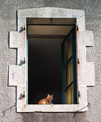 Ginger Cat, Rochechouart - Photo of Étagnac