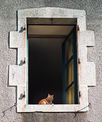 Ginger Cat, Rochechouart - Photo of Chéronnac