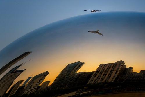 ChicaGull Flyover