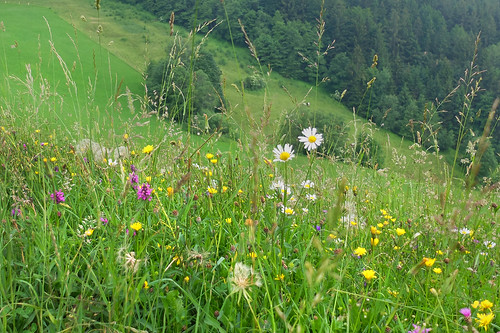 Mountain meadow - it's summer . .
