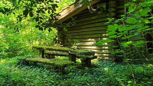 Un petit coin de forêt