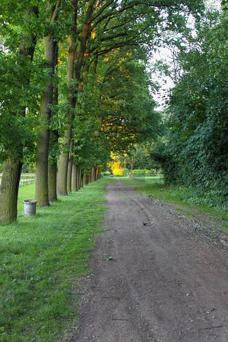 Feldweg in Salzmünde