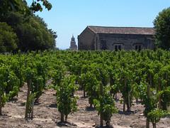 Grape Vines in Parc Palais de Papes - Photo of Avignon
