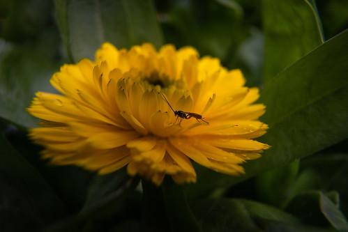 Week 26: Flowers Outtake