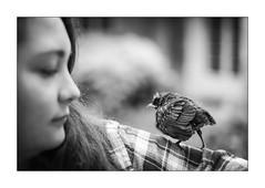 Tombé du nid. - Photo of Robecq