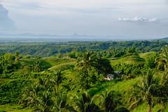 A farmhouse hidden across the fields of Silay