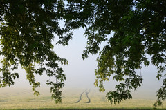 Regard dans la brume - Photo of Biblisheim