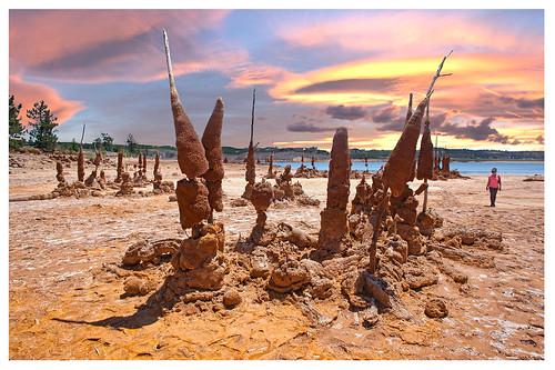 Bronze trees - Arboles de bronce