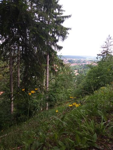 DI 11.06.19 Spaziergang von Ilsenburg zum Ilsestein