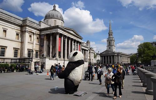 Rare Panda Sighting in Trafalgar Square