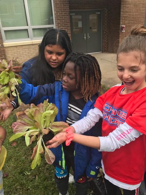 youth garden, Alexandria, VA,  $200 raised