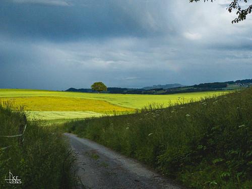 Bramberg- Neuenegg