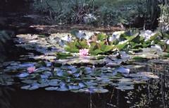 1995-08-12 Giverny 10 - Photo of Gasny