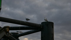 Seagulls at ferry terminal