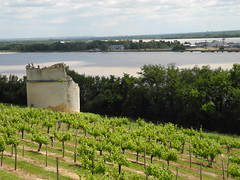 L'estuaire de la Gironde et le vignoble des Côtes-de-Bourg / Gironde, der größte Mündungstrichter Europas und das Weinbaugebiet Côtes de Bourg / Жиронда (эстуарий) и  виноградник Кот-де-Бур - Photo of Prignac-et-Marcamps