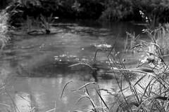 River Bank / Берег реки