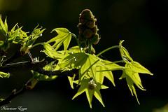 Magnolia - Photo of Blanquefort