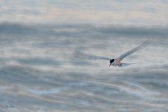 Delicate Flight
