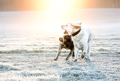 Frost dogs