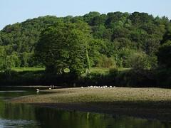 Weir pool gravel bank