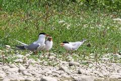 Domaine des oiseaux (Ariège)