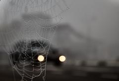Cobweb morning