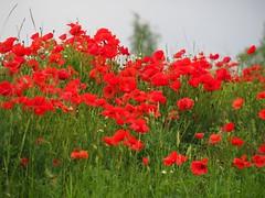 Battle Ground Marne