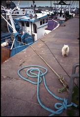 Bateaux de pêche à Saint-Vaast