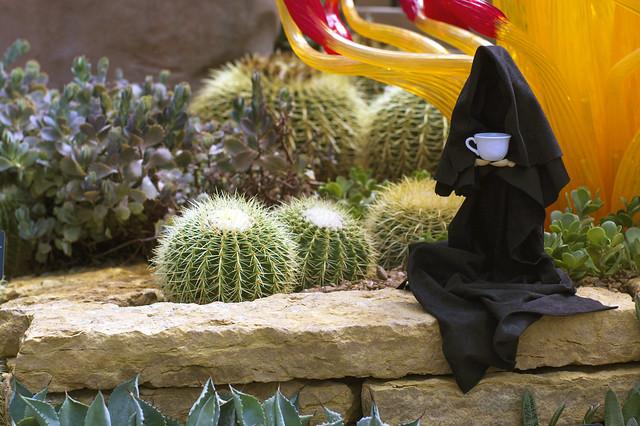 Death cactus
