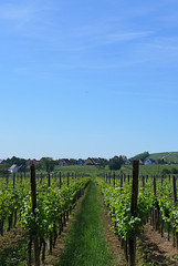 Route des Vins d'Alsace - Photo of Rodern