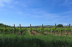 Vignoble - Photo of Rodern