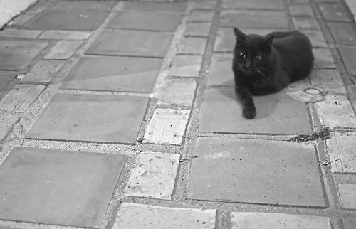 Cuando el Gato Busca la Sombra