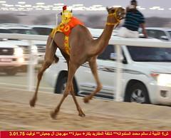 صور مهرجان آل جحيش  (النسخة الثانية) للمفاريد 28-6-2019