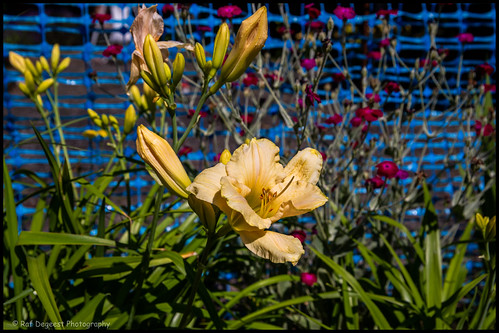 26/52 flowers