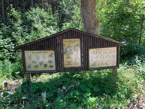 Altes Wald Plakat