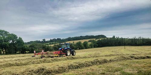 22/52 Making Hay