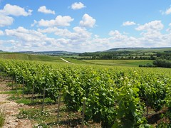 Champagne region - Photo of Sainte-Gemme