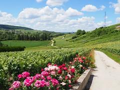 Champagne region - Photo of Troissy