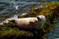 Seal Scheveningen 2019 😁