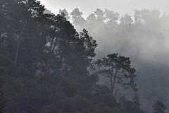 _DSC4699 : matinée brumeuse @ Vernet-les-Bains - Photo of Codalet
